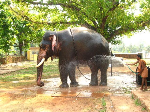 Photo of Sri Lanka's favourite, weirdest and cutest animals